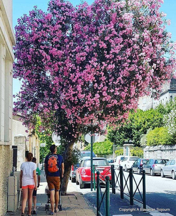 A Week in Corsica