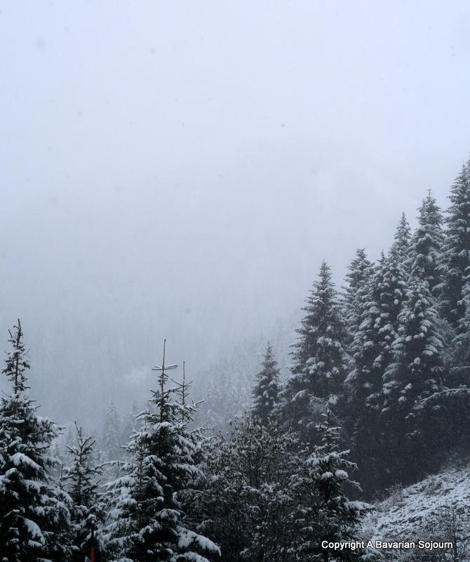 alpine trees mittersill