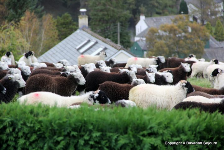 Our Lake District Neighbours