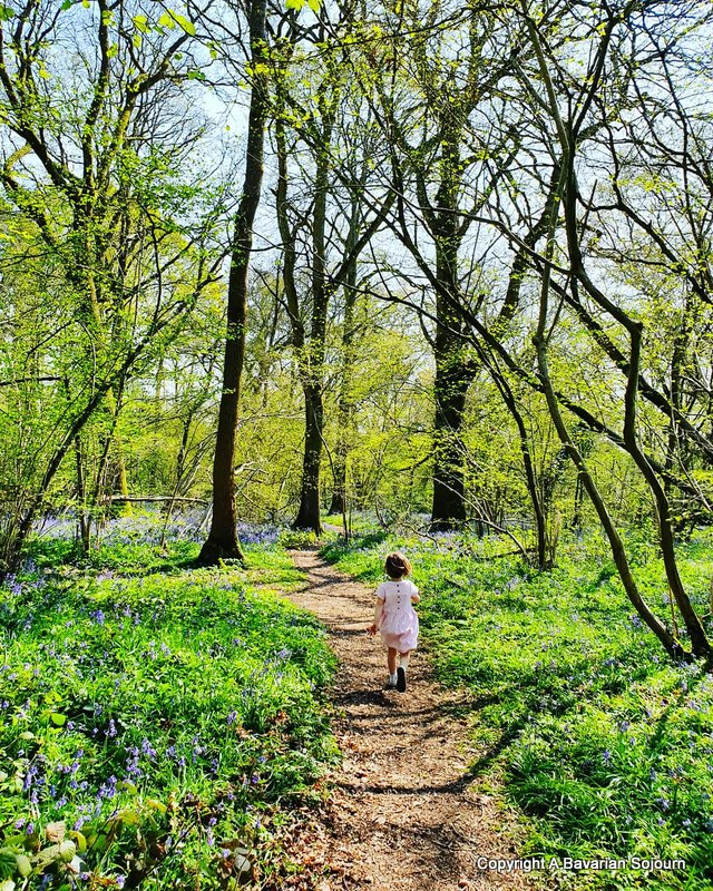 Bluebells Hampshire