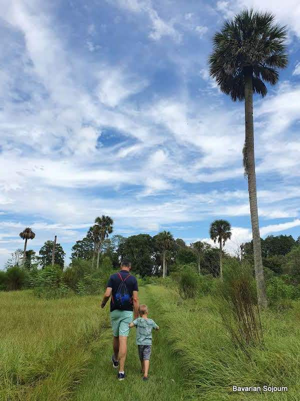 father and son with palm tree and floridian blue skies