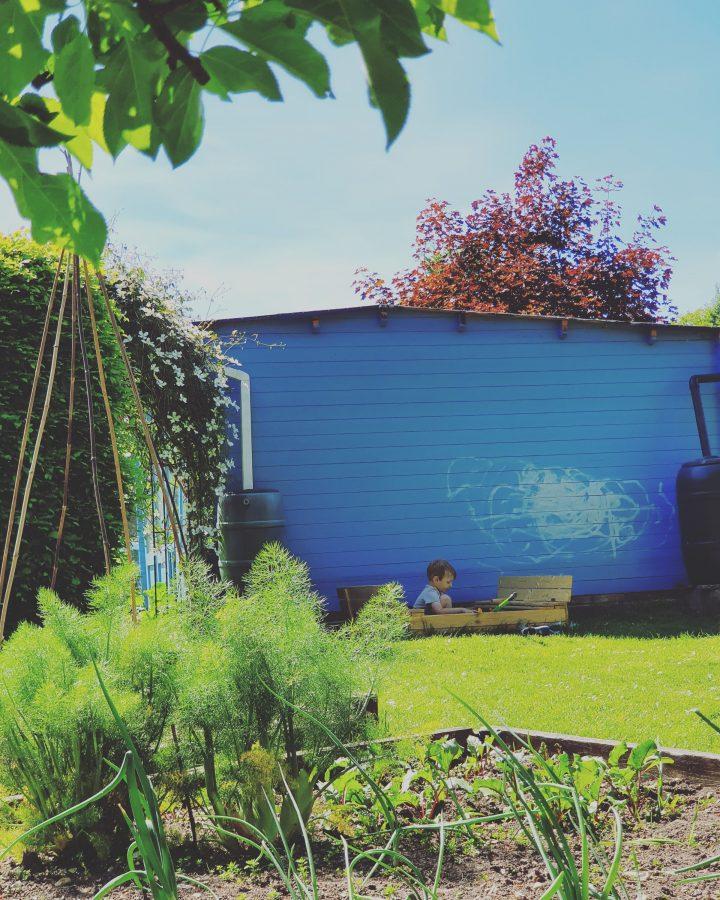 Apprentice Gardener
